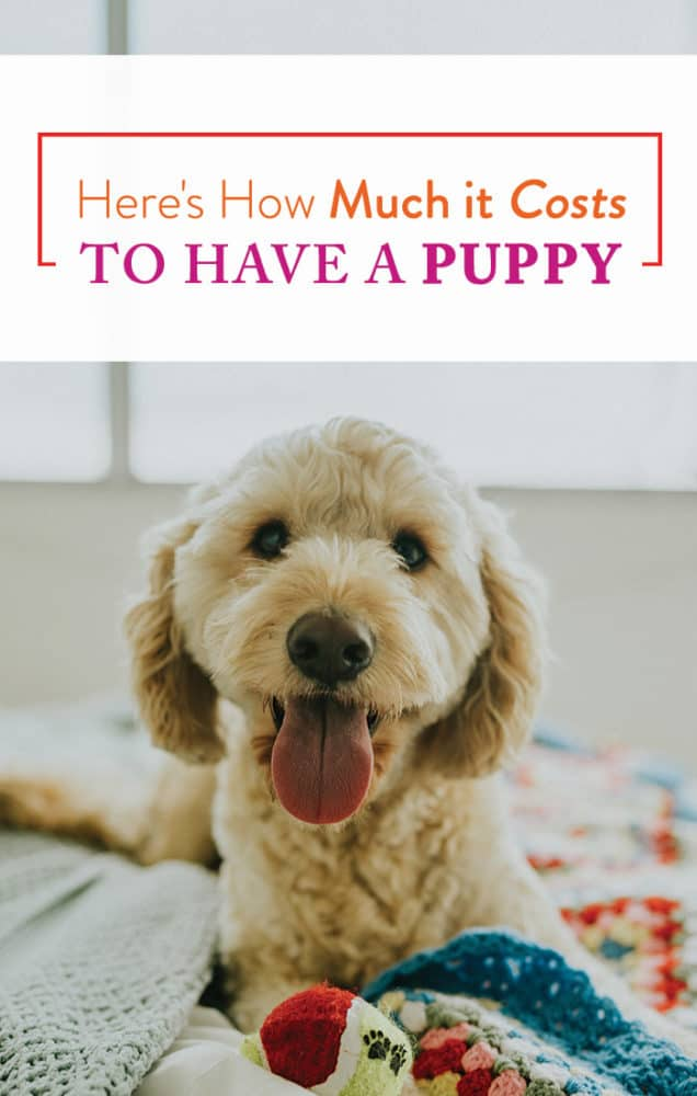 How Much Does A Puppy Cost? - Financial Best Life